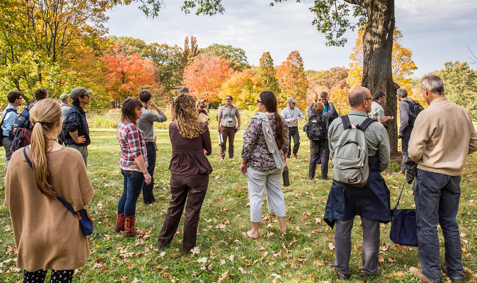 Group observing the Oak Collection at The Morton Arboretum